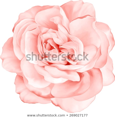 Stock photo: Light Pink Flower Detail