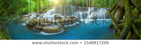 ツリー · シダ · 滝 · 熱帯 · 雨林 · 楽園 - ストックフォト © 3523studio