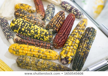 Stock photo: Sweet corn, genetic engineering