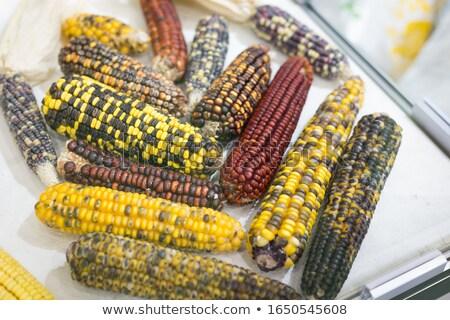 fundo · verde · milho · agricultura · vegetal - foto stock © stevanovicigor