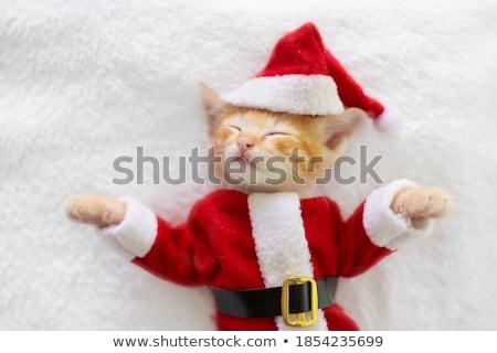 natal · festa · animais · bonitinho - foto stock © pcanzo