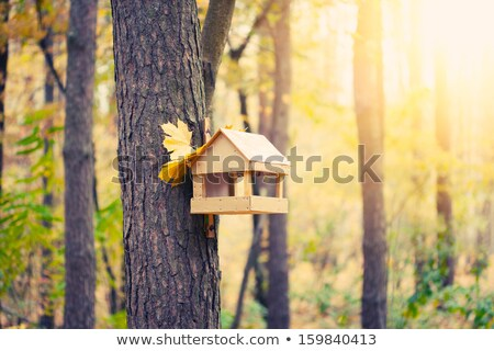 birdhouse on the tree in autumn stock photo © capturelight