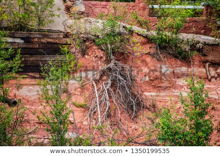 Tree roots cling to crumbling sandstone Stock photo © emattil