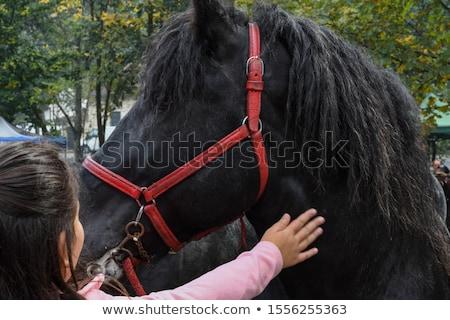 Paard silhouet naar goede pose vector Stockfoto © Istanbul2009