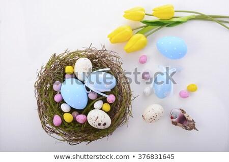 Easter Egg in Nest on Wood Overhead Stock photo © frannyanne