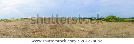 flattend area in a vine growing region stock photo © meinzahn