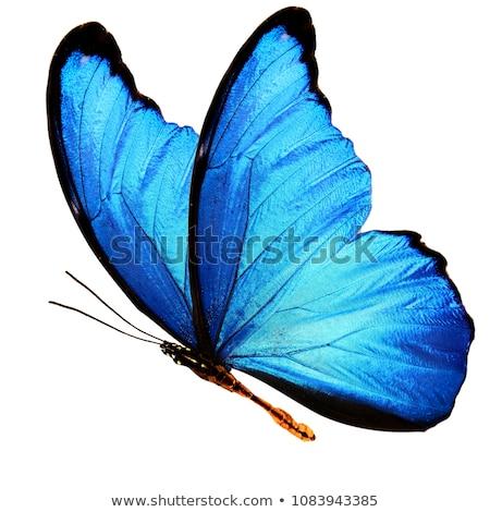 pillangó · átváltozás · illusztráció · gyerekek · iskola · gyermek - stock fotó © blackmoon979