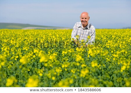Stock photo: Rapeseed canola flower in farmers hand
