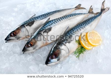3 Fresh Fish Stock photo © idesign