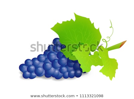 grape branch with blue grapes realistic vector illustartion stock photo © m_pavlov