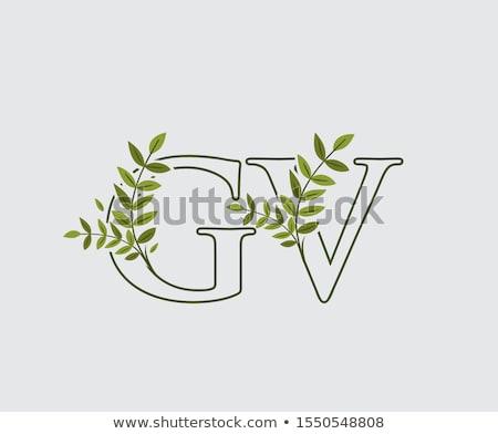 Brief groen blad overwinning logo icon vector Stockfoto © blaskorizov