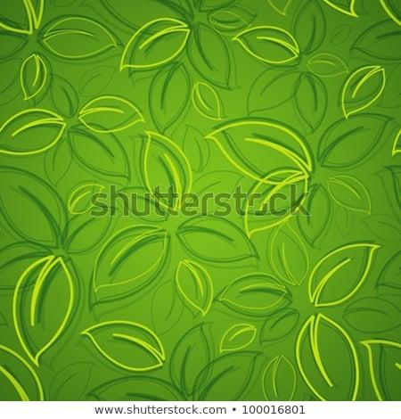 Dizayn yeşil yaprakları örnek bahar doğa Stok fotoğraf © colematt