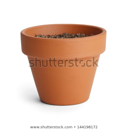 Plant in pot with soil isolated Stock photo © bluering