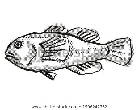Plain Coralgoby Australian Fish Cartoon Retro Drawing Stock photo © patrimonio