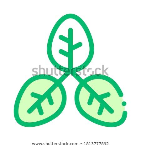 Bush planta hojas vector delgado línea Foto stock © pikepicture