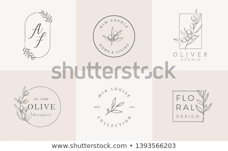 Vetor abstrato banners azeitonas oliva Foto stock © blumer1979