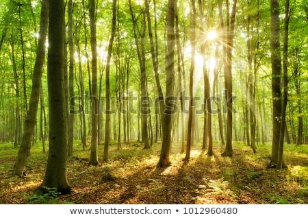 緑 森林 太陽 葉 川 ストックフォト © vapi