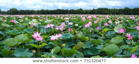 zöld · fák · nap · víz · tájkép · kert - stock fotó © tito