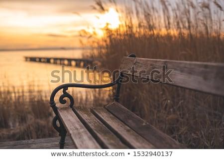 empty benches Stock photo © Hasenonkel