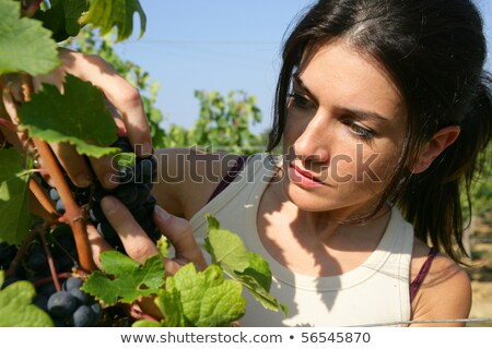portrait of woman observing a bunch of grapes Stock photo © photography33