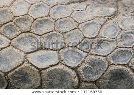 african turtle skin stock photo © smithore