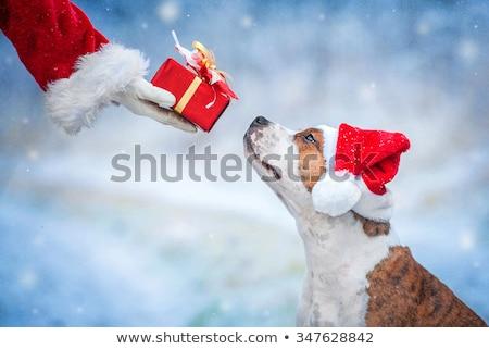 サンタクロース · 犬 · 現在 · 帽子 - ストックフォト © LynneAlbright