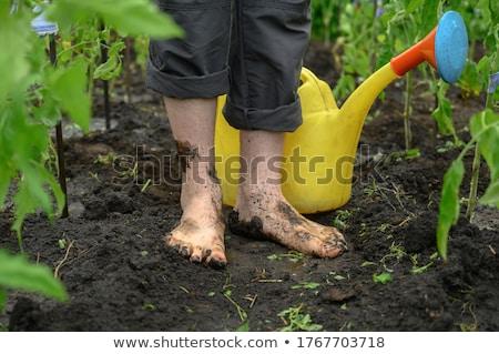Bahçıvanlık ayaklar kirli bahçe Stok fotoğraf © jeremywhat