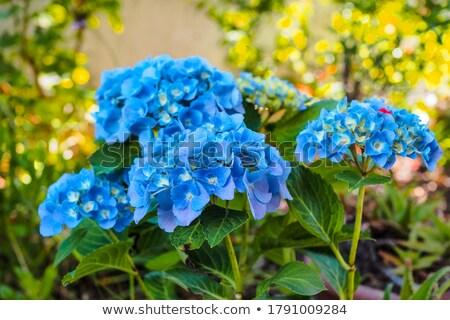 Vektor végtelen minta virág művészet tapéta klasszikus Stock fotó © LittleLion