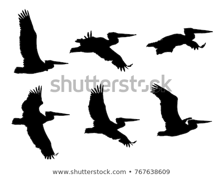 collection of pelicans in flight  Stock photo © taviphoto