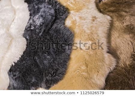 ファジー クローズアップ 短い ストックフォト © Stocksnapper
