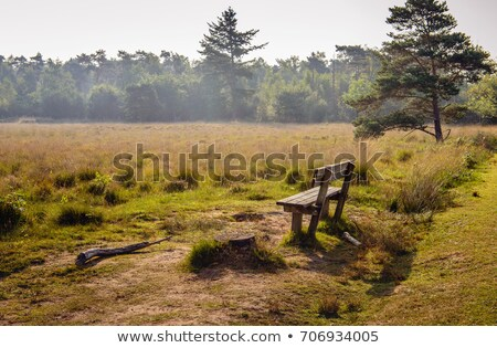 Empty wooden bench in heather in landscape Stock photo © ivonnewierink