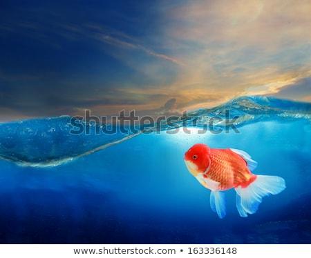 Blasen Wolke Aquarium Gold Fische eps10 Stock foto © LoopAll