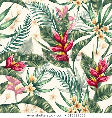 naturelles · environnement · laisse · peu · profond · fleurs - photo stock © kheat
