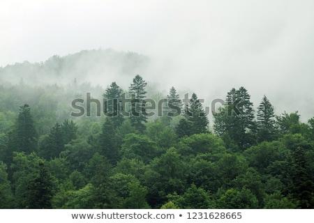 Fák domboldal köd fa tájkép kő Stock fotó © All32