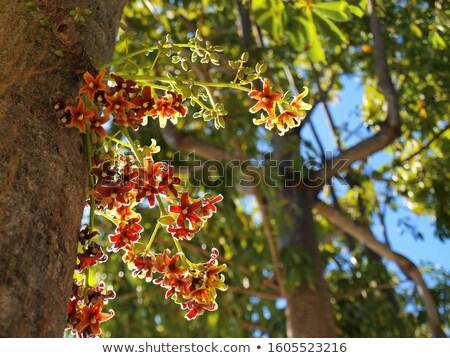 Stock photo: Reddish hazel leaf