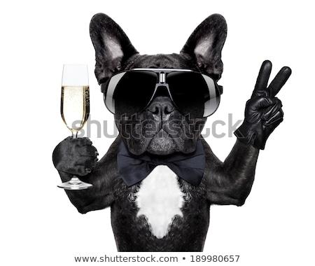French bulldog with champagne  Stock photo © OleksandrO