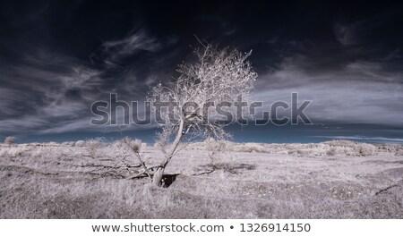Infravörös fa föld kilátás kék levelek Stock fotó © ldambies
