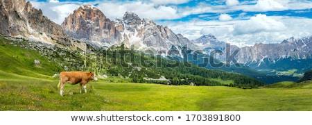 Inekler İsviçre dağlar su bulutlar çim Stok fotoğraf © compuinfoto