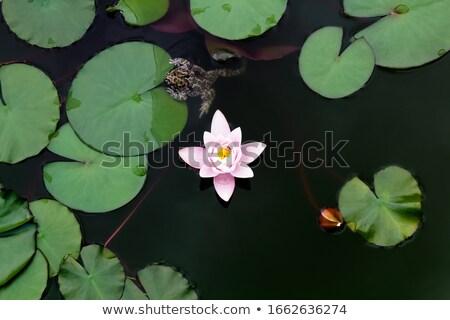 kurbağa · yeşil · yaprak · yaprak · yeşil · ücretsiz · Rainforest - stok fotoğraf © bluering