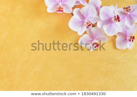 Acht goud orchideeën roze festival internationale Stockfoto © blackmoon979