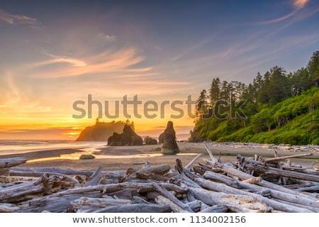 Rubin tengerpart tájkép felhők naplemente park Stock fotó © icemanj