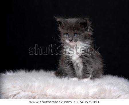 Сток-фото: крошечный · неделя · старые · котенка · белый · прелестный