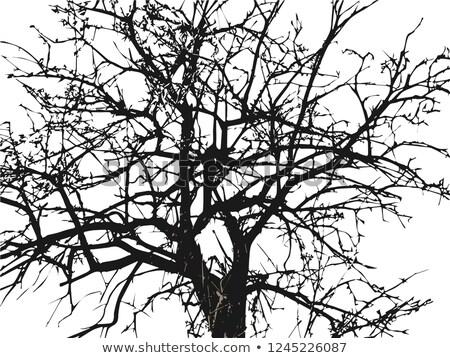 árvore muitos ilustração folha fundo Foto stock © bluering