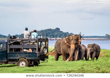 asian elephant in national park stock photo © bezikus