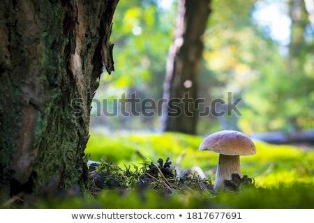 big white mushroom in forest Stock photo © romvo