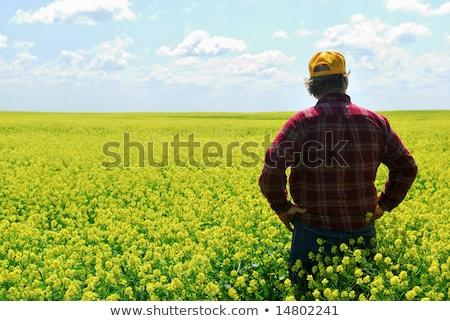 gazda · megvizsgál · zab · termés · mező · közelkép - stock fotó © simazoran