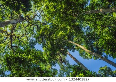 熱帯雨林 バリ 島 インドネシア 森林 葉 ストックフォト © galitskaya