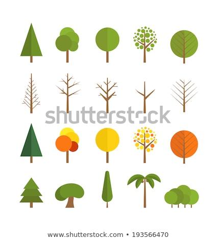 palm tree vector flat icon stock photo © smoki