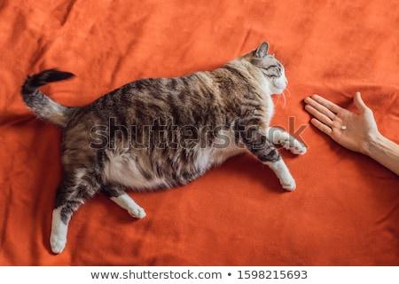 Yağ kedi tıp hap turuncu kadın Stok fotoğraf © galitskaya