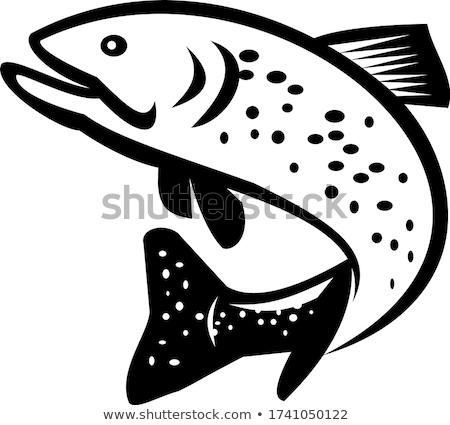 Brook Char Trout Jumping Up Retro Black and White Stock photo © patrimonio